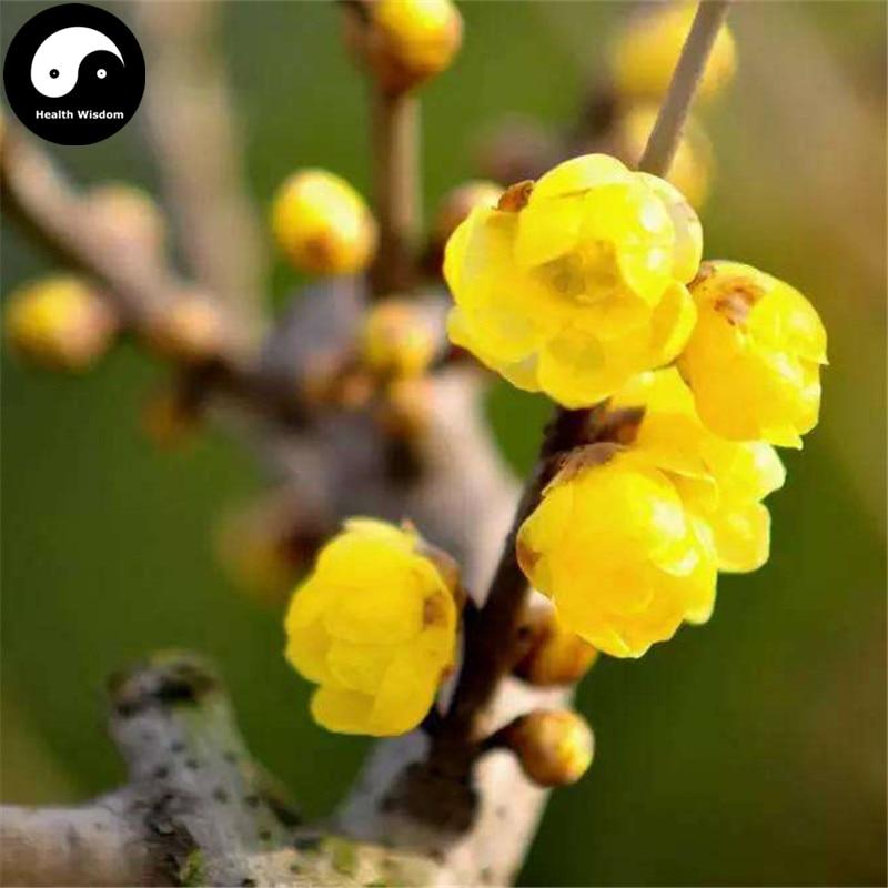 Купить зимние красивые Черемуха муме дерево Semente 30 шт. завод желтый цветок сливы La Mei
