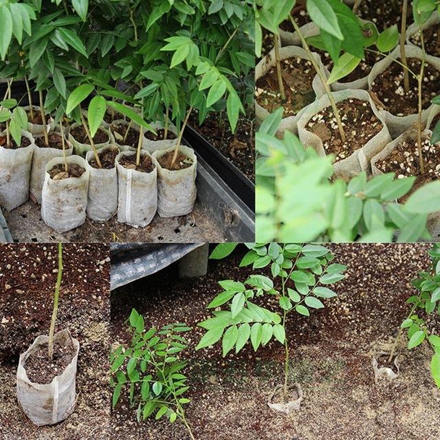 100pcs/bag   Nursery Pots Environmental Protection Nursery Pots Seedling-Raising Garden Supplies