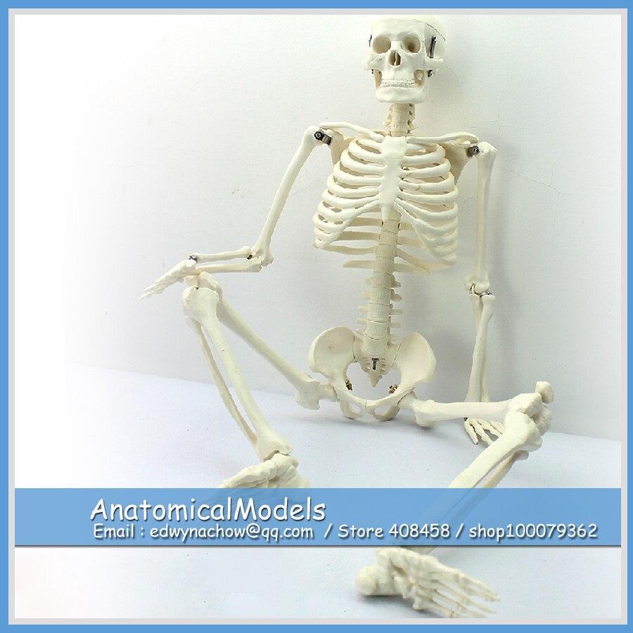 12366 SKELETON06 Medium 85cm Human Skeleton on Stand, Medical Science Educational Teaching Anatomical Models human anatomical male genital urinary pelvic system dissect medical organ model school hospital