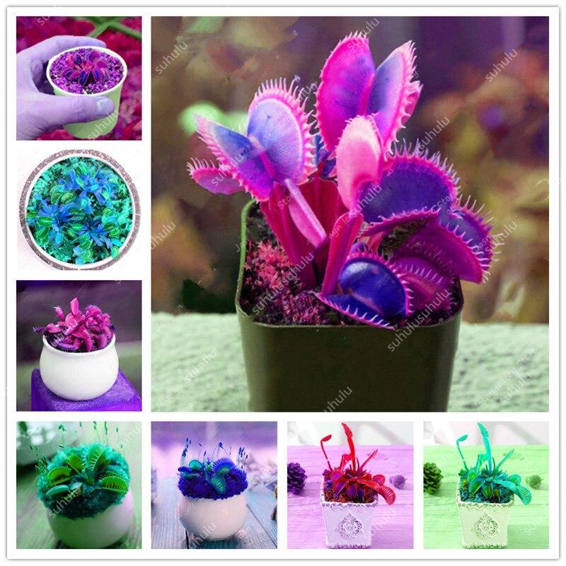 200 Pcs Carnivorous Garden Potted Flytrap Bonsai Plantflower Dionaea Muscipula Giant Clip Venus Flytrap Potted Plant