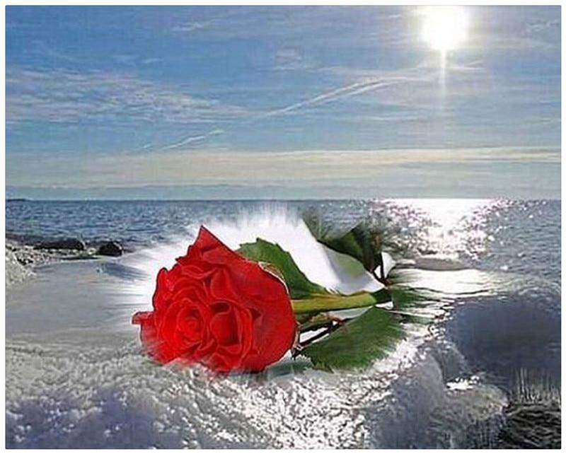 Diy diamond painting Sea rose full diamond cross stitch