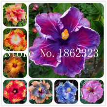 New Arrival 2018! 100 Pcs Hibiscus bonsai Indoor Plants Flower plant, 24 Colors to Choose Plant for Home Garden DIY Potted Plant(China)