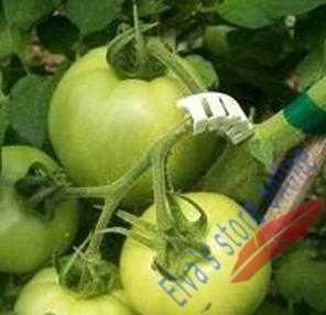 50 шт. томат, Горшечное растение, зажим для крепления растений, лозы томатов для выращивания цветов, овощей, зажим для сельского хозяйства