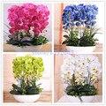 100 unids orquídea, orquídea semillas, phalaenopsis orquídea, hidropónico bonsai semillas de flores de cuatro estaciones, las plantas en maceta para jardín de su casa