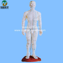 Acupuncture Human Body Model (In Chinese) 50CM BIX – Y1008 WBW224