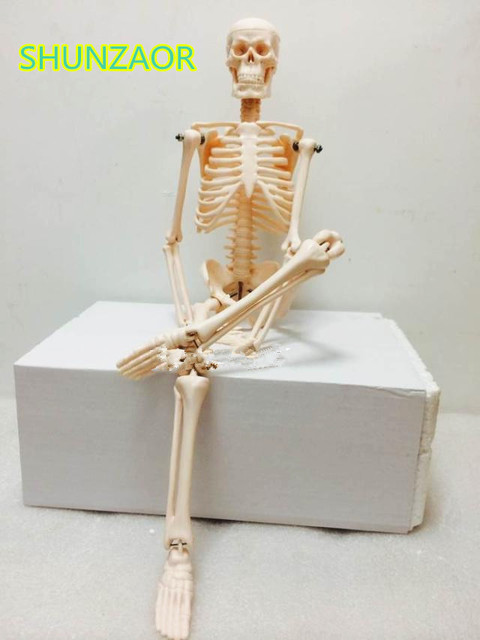 Fexible 45CM Human Anatomical Anatomy Skeleton Model Medical ...