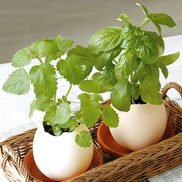 1PCS Novelty Creative Lucky Egg Shaped Potted Plants Egg Hatches Plant Desktop Egg Potted Decor