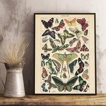 Mariposa antigua Vintage Poster impresiones insectos naturaleza educación pared arte lienzo pintura cuadro niños habitación hogar pared Decoración