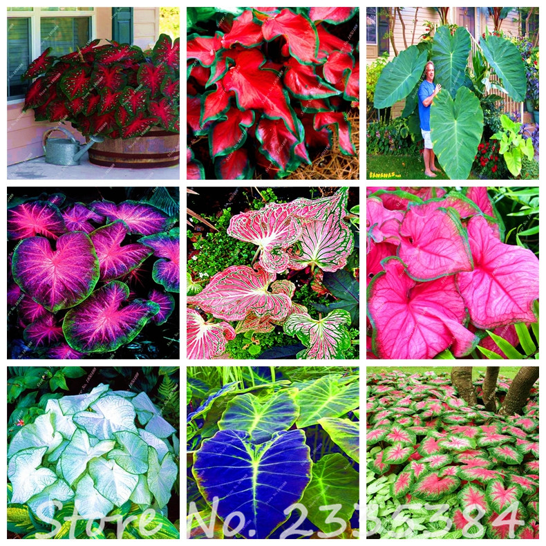 Online get cheap indoor office plants for Cheap garden plants