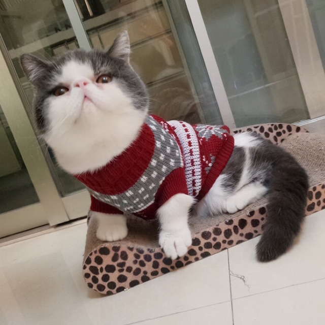 Cute Winter Warm Multi Color Cet Clothes
