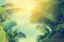 summer Palm Trees Blue Sky Tropical Coast Vintage Toned  Stylized retro background Vinyl cloth  Computer print wall backdrop