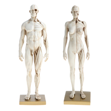Buy anatomical models for artists and get free shipping on ...