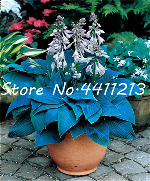 12289-01-BAKIE_20120504165100