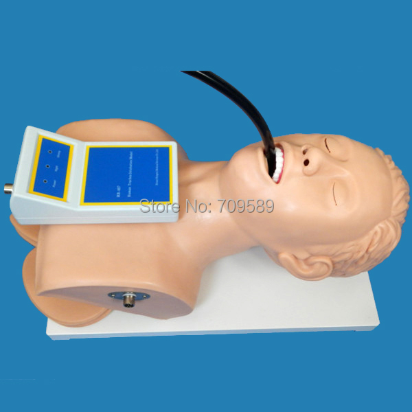 Vivid Adult Intubation Head, Intubation trainer, Tracheal Intubation Training Model iso economic newborn baby intubation training model intubation trainer
