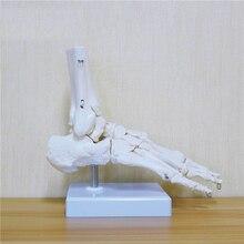 Гибкая человеческая модель для ног, подошва для ног, суставы голеностопного сустава, голеностопного сустава и фибулы, модель для ортопедического обучения для медицинских целей