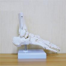 Flexible Human Foot Bone Model Foot Sole Joints of Foot Ankle Tibia and Fibula Foot Model of Orthopedics Teaching for Medical