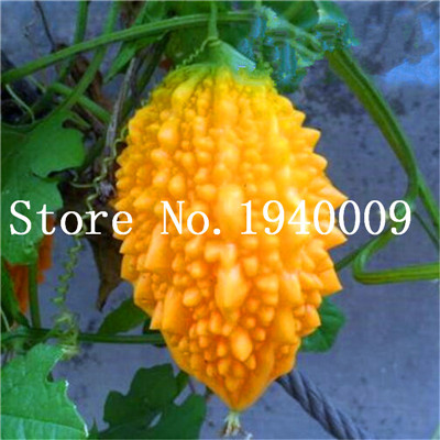 2018 hot sale!! 10 Pcs Long Balsam Pear Bitter Melon Bitter Gourd Kidney  Momordica Charantia, For Home Garden Vegetable