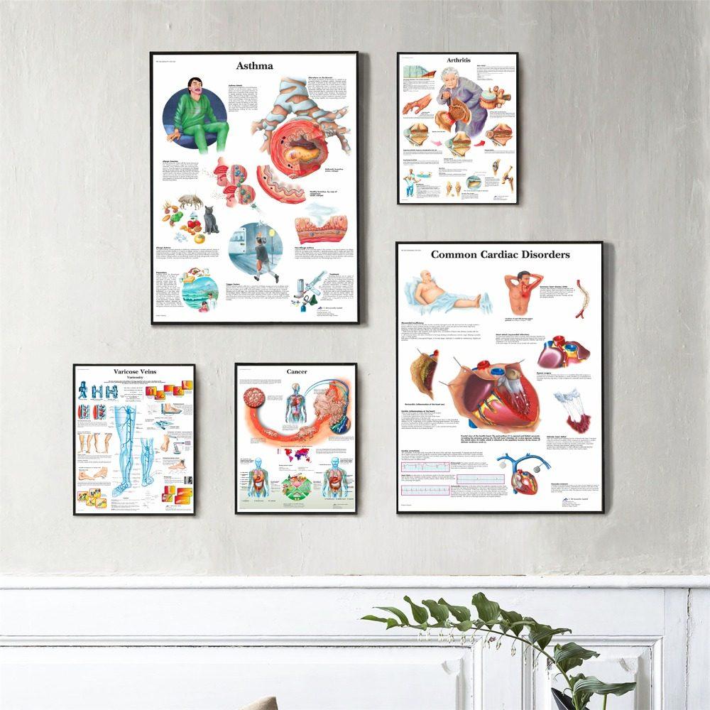 Tienda Online J0864 humano Cuerpo estructura anatomía Chart pop ...