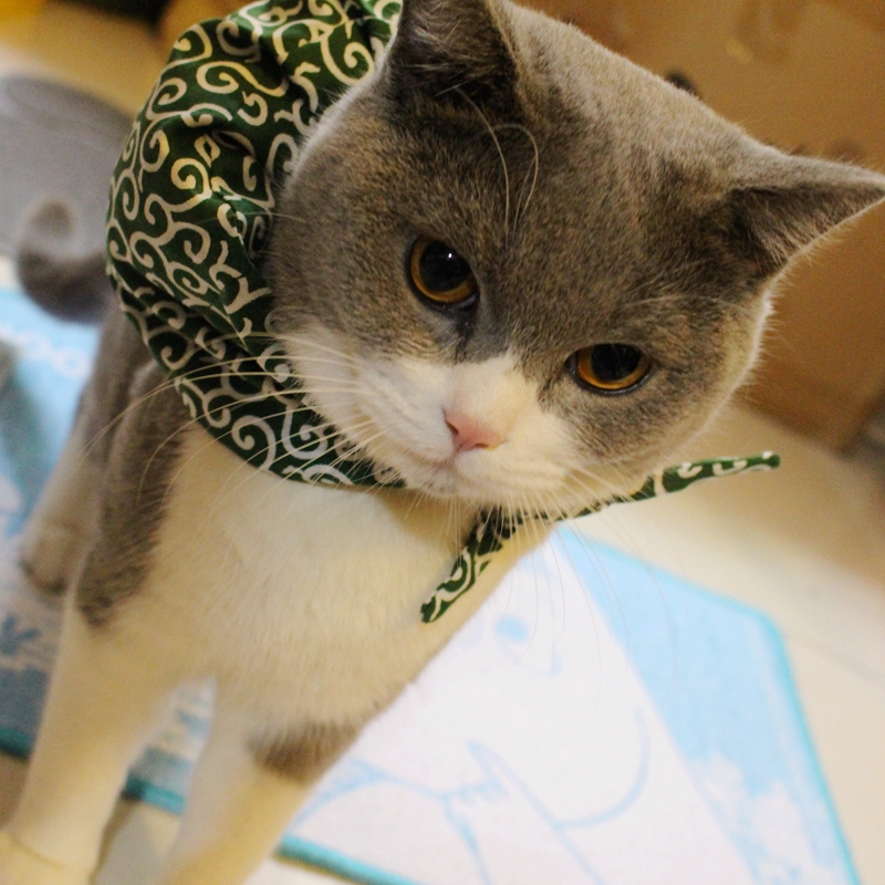 Master Wants To Run Away! Japanese Style Pet Collar American Shorthair Cat Garfield Adorable Pillow Scarf Small Bundle