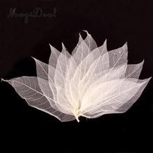 50Pcs Natural Magnolia Skeleton Leaf Leaves Card Scrapbook   White