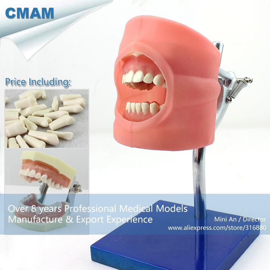12557/CMAM-DENTAL01 préparation de l'opération dentaire modèle d'étude dentaire mannequin, formation en sciences médicales modèles anatomiques