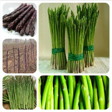 50Pcs Asparagus Organic Heirloom Rare Green Vegetable Perennial Garden small luck Bamboo home plant flower pot planters(China)