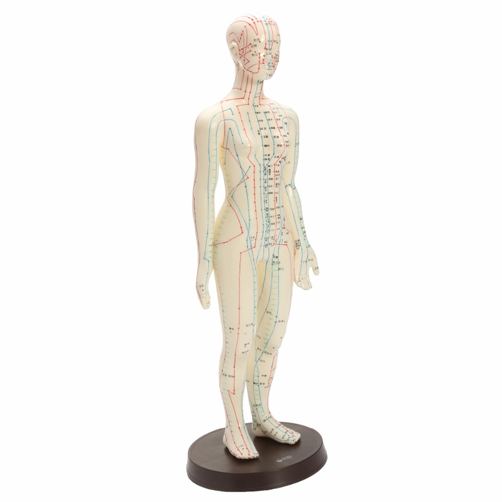 Human Body Acupuncture Model Female Meridians Model Chart Book Base 48cm pig acupuncture model animal acupuncture model