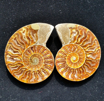 1 pair 2 pieces natural ammonite fossil specimen hell healing Madagascar