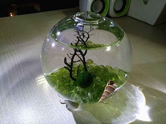 Marimo Globe Terrarium Kit 3 5 Footed Vase With Olivine Gravels