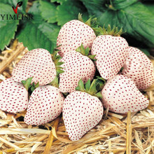100seeds/bag White Strawberry Seeds Rare Sweet  Organic White Strawberry Fragaria Fruit seeds for home garden bonsai Plant