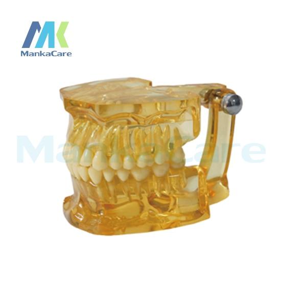Manka Care - Clear Extraction Model Oral Model Teeth Tooth Model pro teeth whitening oral irrigator electric teeth cleaning machine irrigador dental water flosser teeth care tools m2