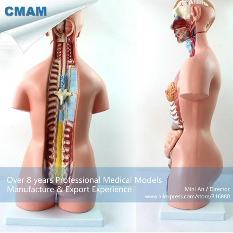 12018 CMAM-TORSO07 School Education Model 85CM Unisex Human Torso 23 Parts,Female face,Human Anatomical Model cmam brain17 human sympathetic nervous system anatomical model for education
