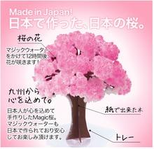 2017 14x11cm roz mare cresc hârtie Magic Sakura japoneză arbore Magic Cultivarea Copaci Desktop Desktop Cires Blossom Crăciun 10PCS