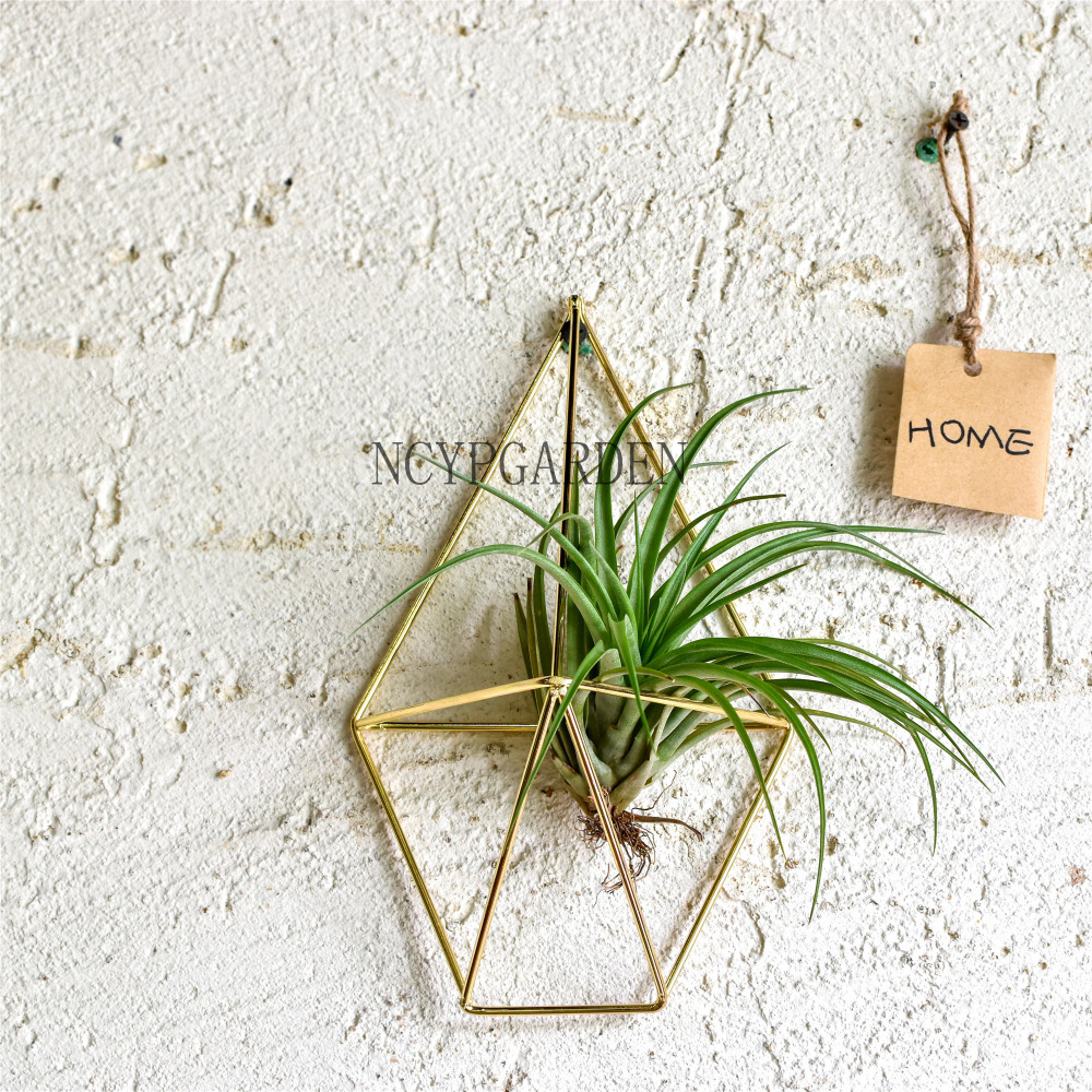 Rustic Wall Mount Hanging Geometric Metal Tillandsia Air Plants Holder Iron Rack Black Wall Accent Decor Home Modern ...