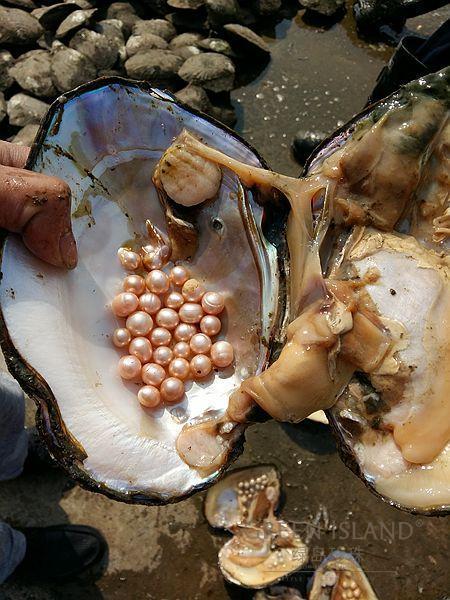 20-30 perles deau douce sous vide-paquet amour souhait perle huître 3-10mm perles naturelles grande huître fête danniversaire cadeau de mariage ABH643