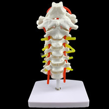 Modelo anatômico humano vértebra cervical modelo coluna cervical com artéria do pescoço disco de osso occipital e nervo modelo 18x13x8cm