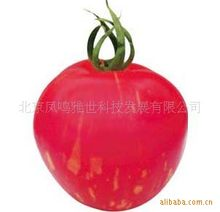 Cai Yu small tomato bonsais - pink yellow stripe color tomato -100pcs(China)
