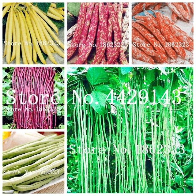 Hot Sale 50 pçs/saco Feijão Phaseolus vulgaris planta bonsai planta vegetal, feijão verde, o crescimento Natural, planta para o jardim de casa