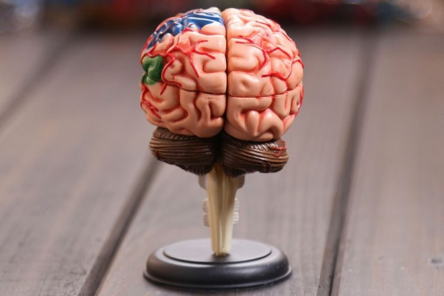 4D Master Human Brain Model Structure Model Assembled Anatomy Dimensional Model 32pcs Set Free Shipping