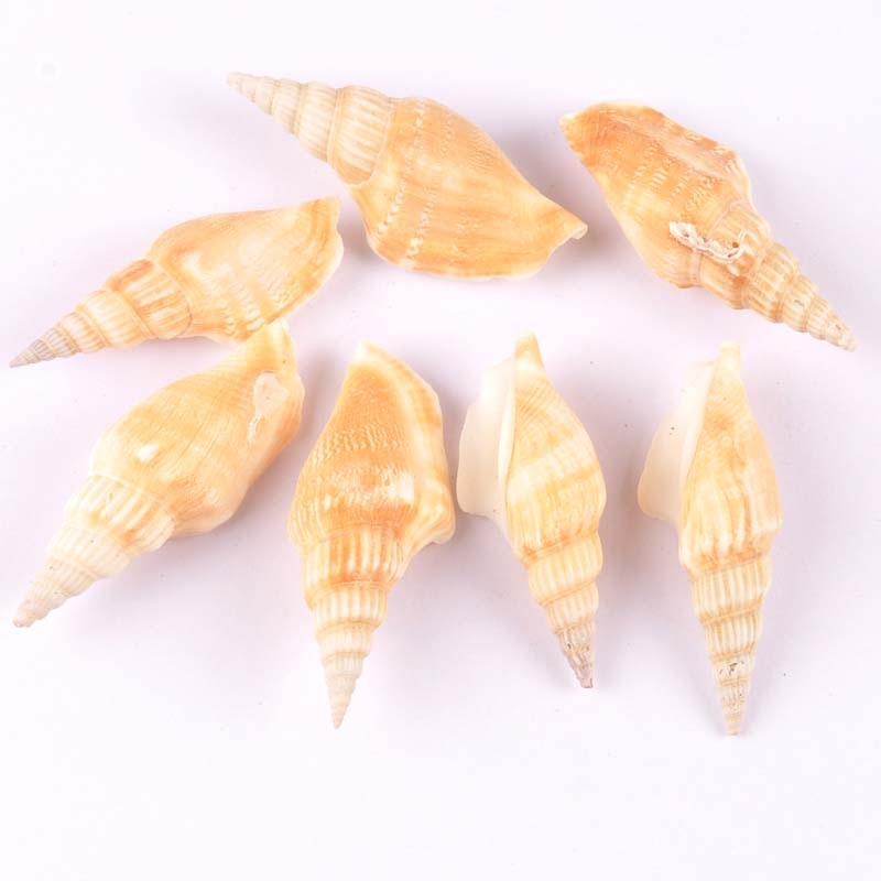 5pcs Natural Spiral Shell Scrapbooking Craft Seashells For Glass Bottle Home Diy Decoration TRS0277
