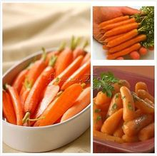 400 Little Carrot seeds~~vegetable garden plant