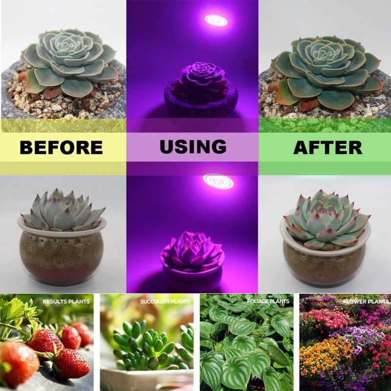 E27 220 V LED Planta Crescer Lâmpada Espectro completo Fitolampy Fito Da Lâmpada Para Plantas Flores Hidroponia Jardim Interior Crescer caixa tenda