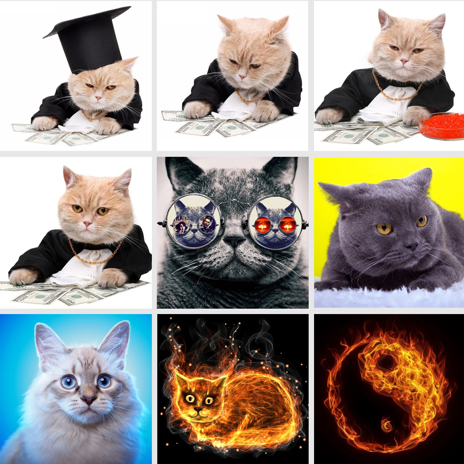 5D DIY Diamond Painting Cat &Dollar Cross Stitch Cash With Cat Animal Needlework Home Decorative Full Square Diamond Embroidery