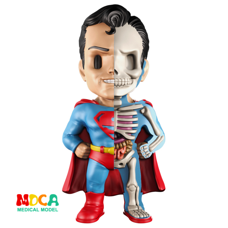 Superman 4D XXRAY master Mighty Jaxx Jason Freeny anatomy Cartoon ornament robin hood 4d xxray master mighty jaxx jason freeny anatomy cartoon ornament