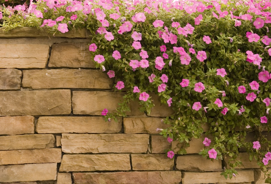 Laeacco Pink Spring Photo Backdrop Stone Piled Wall Floral Vine Baby Portrait Scene Background Studio