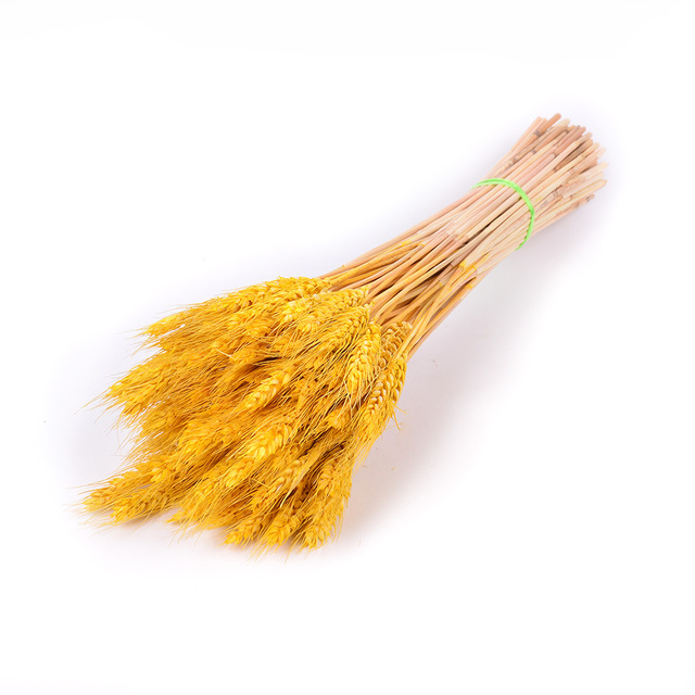 Natural dried flower 9