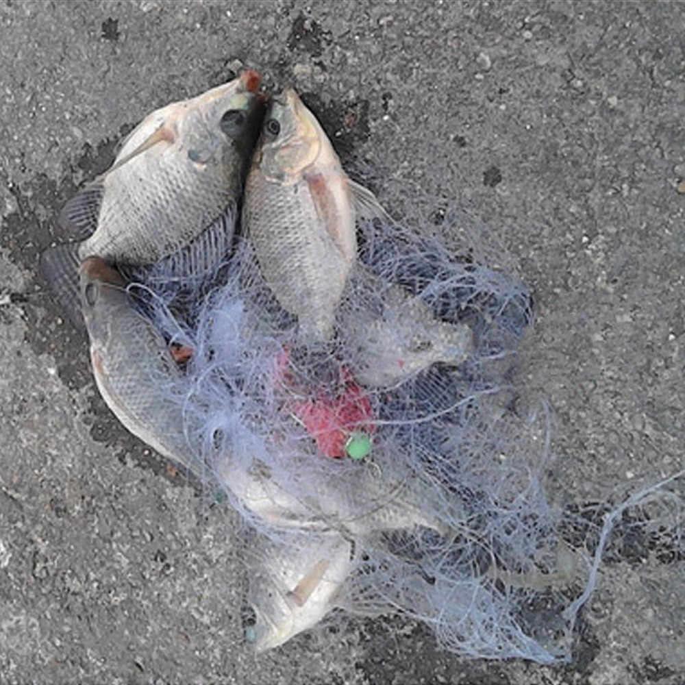 Fishing Net Trap Luminous Bead Copper Spring Shoal Netting Fish Tackle 7-13Mesh