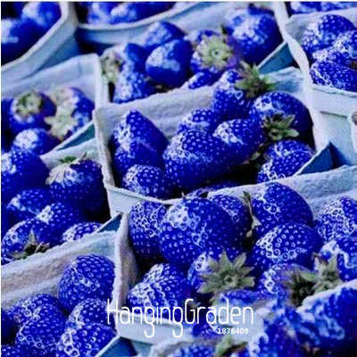 Best-Selling!50 Pcs/Lot Blue Rare Fruits And Vegetables Strawberry bonsai Home Garden Fruits Potted Plant,#6XWYOK