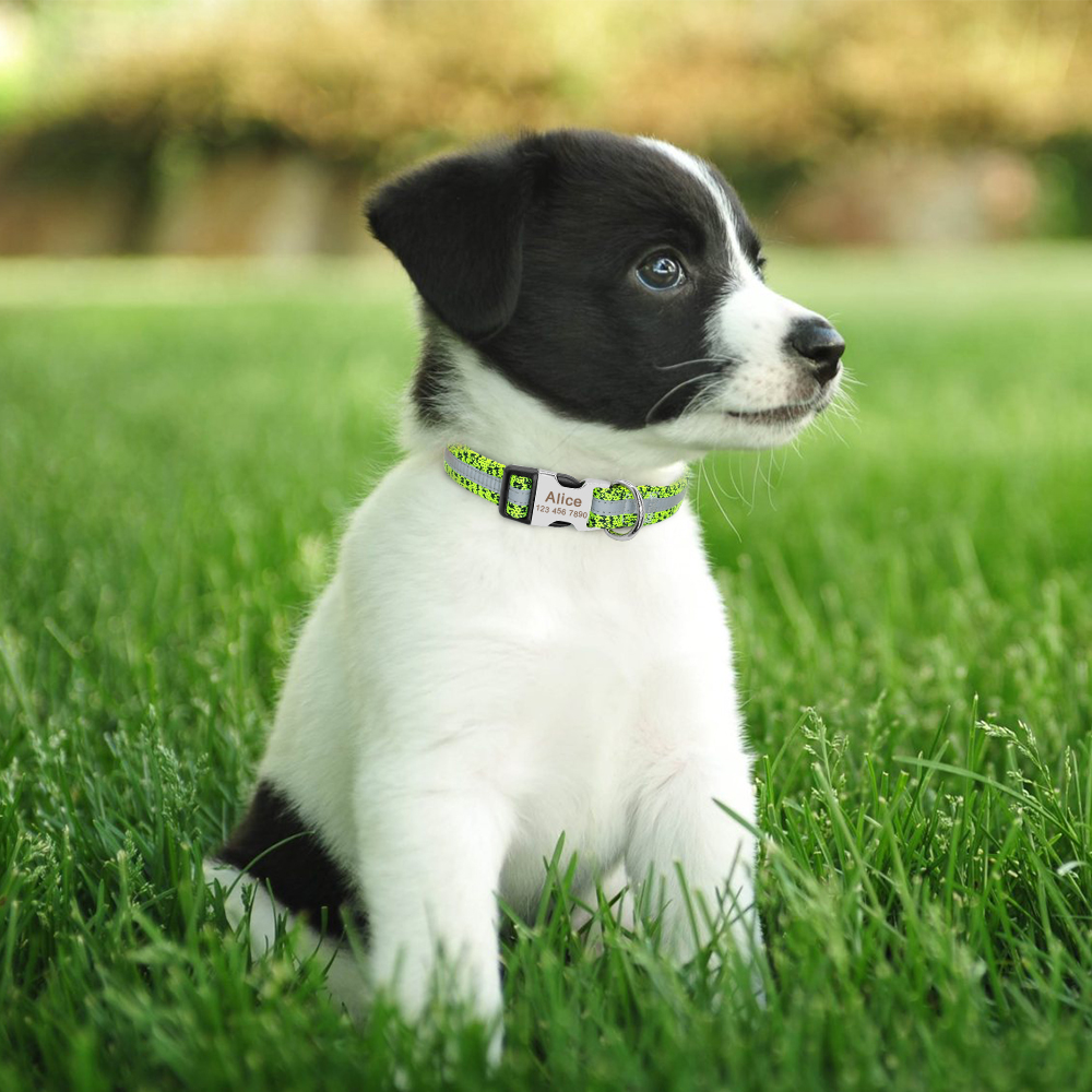 Collar de perro personalizado reflectante 13