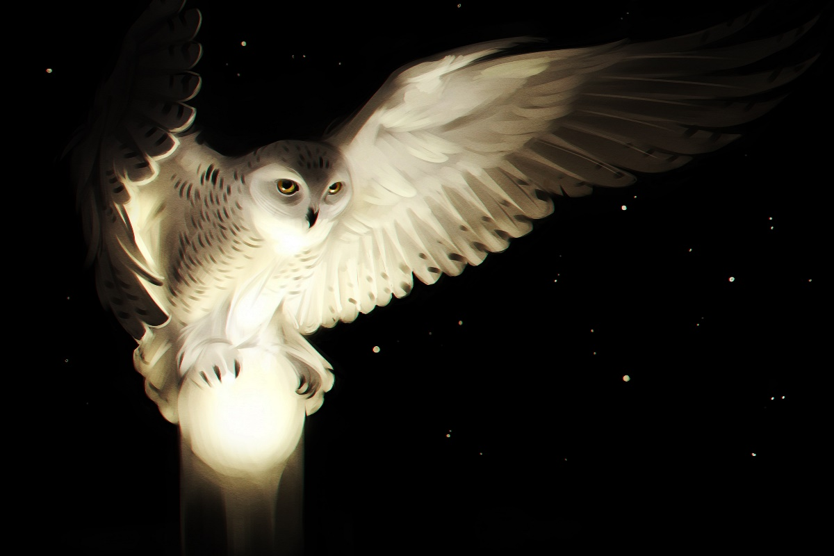 Flying Bird Eyes Owl Art Wings Night Look Cb09 Room Home